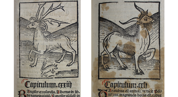 Two woodcut illustrations of horned animals