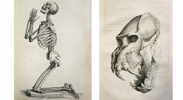 Engraved illustrations of a male human skeleton kneeling as if in prayer, and of the skull of a tiger