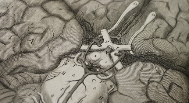 Illustration of the brain from Cerebri anatome. Thomas Willis, published London, 1664.