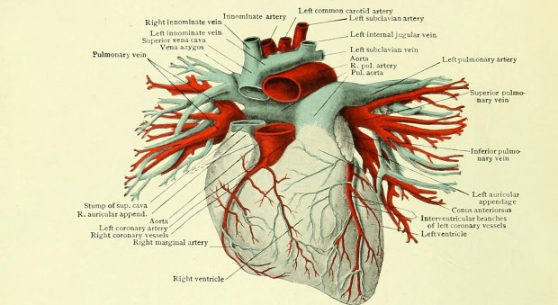 Diseases of the heart and aorta. Arthur Douglass Hirschfelder, published Philadelphia, 1913.