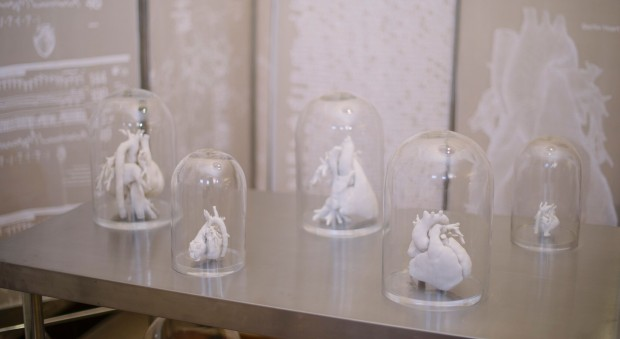 Photograph of work of sculpture depicting internal organs in a white material underneath glass bell jars