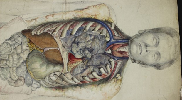 Colour drawing of a dissected body, drawn from above, showing the intact head and opened torso.