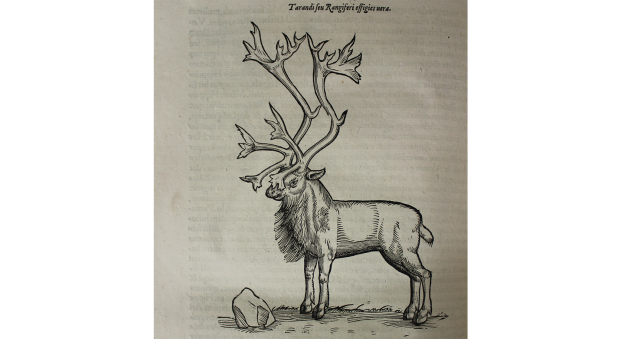 Woodcut illustration of a reindeer