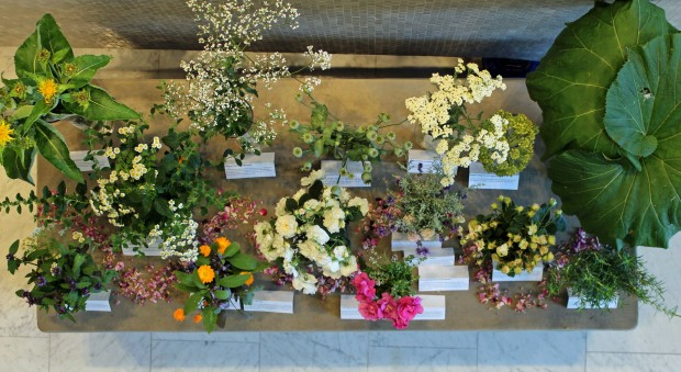 Plants and flowers displayed in the RCP Lasdun Hall, 29 June 2015