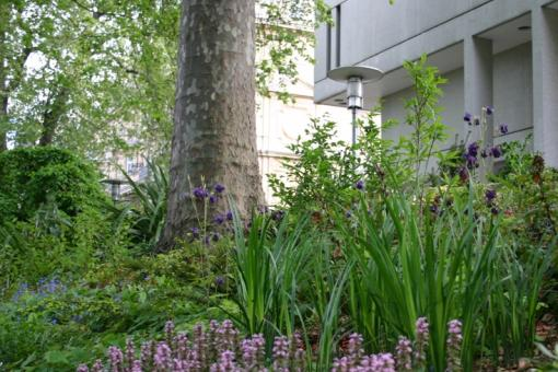 Flowers and trees outside the RCP's main building in central London