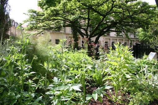 Plants in the RCP medicinal garden