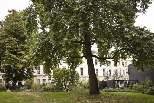 Trees outside the RCP's headquarters adjacent to Regent's Park