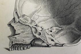 Engraved illustration of the a cross-section of a human skull