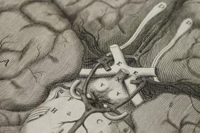 Illustration of the brain from Cerebri anatome. Thomas Willis, published London, 1664.