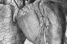 Black and white engraved illustration of the muscle and blood vessels of the heart