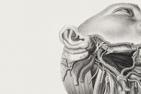 Image of dissected human head from Tabulae Nerologicae by Scarpa, 1794